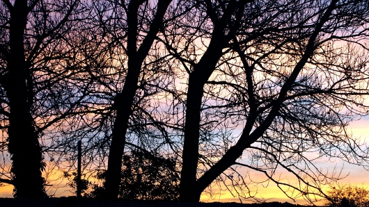 These are the trees in my backyard. The sun always peeks out behind them in the morning. What a beautiful sight.