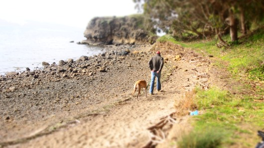 Jake and Cousteau walking along the beach in Tomales Bay.
