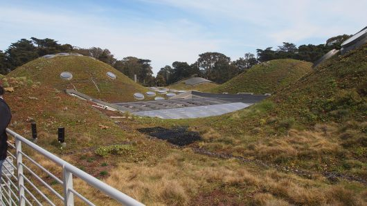 Living Roof at California Academy of Sciences