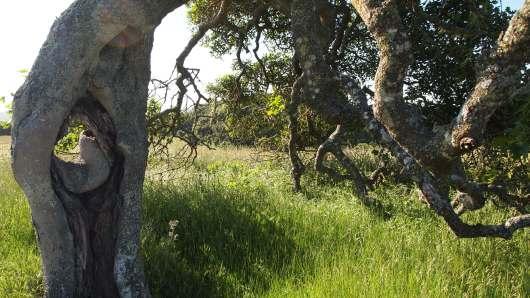 Tree at Helen Putnam Regional Park